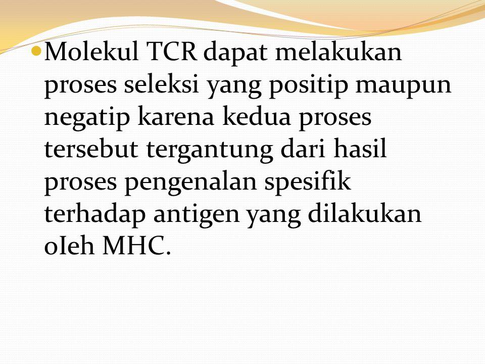 Molekul TCR dapat melakukan proses seleksi yang positip maupun negatip karena kedua proses tersebut tergantung dari hasil proses pengenalan spesifik t