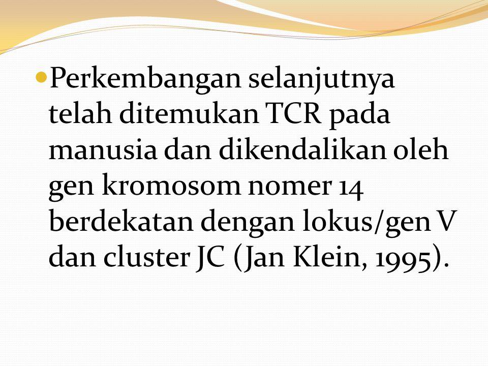 Perkembangan selanjutnya telah ditemukan TCR pada manusia dan dikendalikan oleh gen kromosom nomer 14 berdekatan dengan lokus/gen V dan cluster JC (Ja