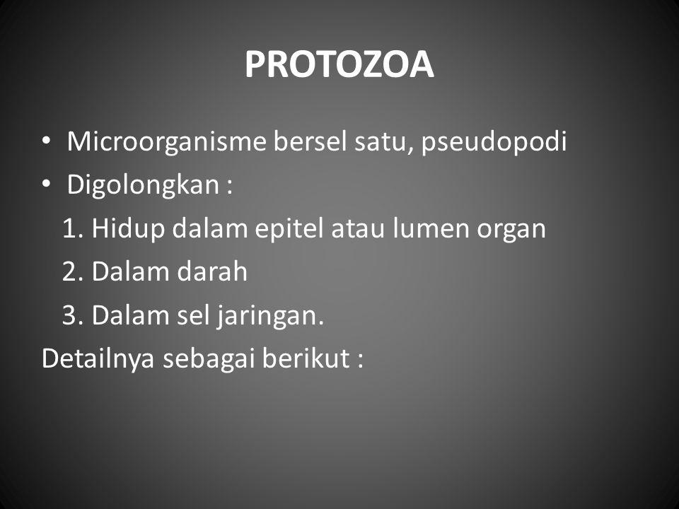 PROTOZOA Microorganisme bersel satu, pseudopodi Digolongkan : 1. Hidup dalam epitel atau lumen organ 2. Dalam darah 3. Dalam sel jaringan. Detailnya s