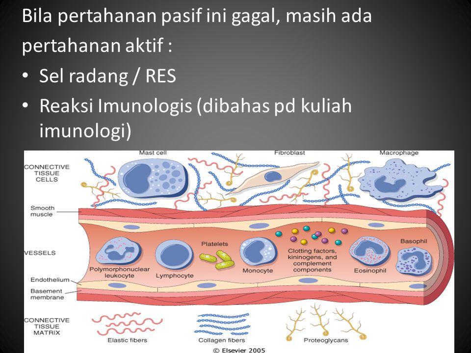 Bila pertahanan pasif ini gagal, masih ada pertahanan aktif : Sel radang / RES Reaksi Imunologis (dibahas pd kuliah imunologi)