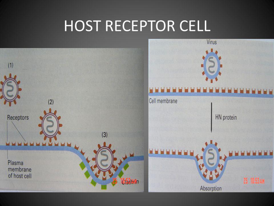 HOST RECEPTOR CELL