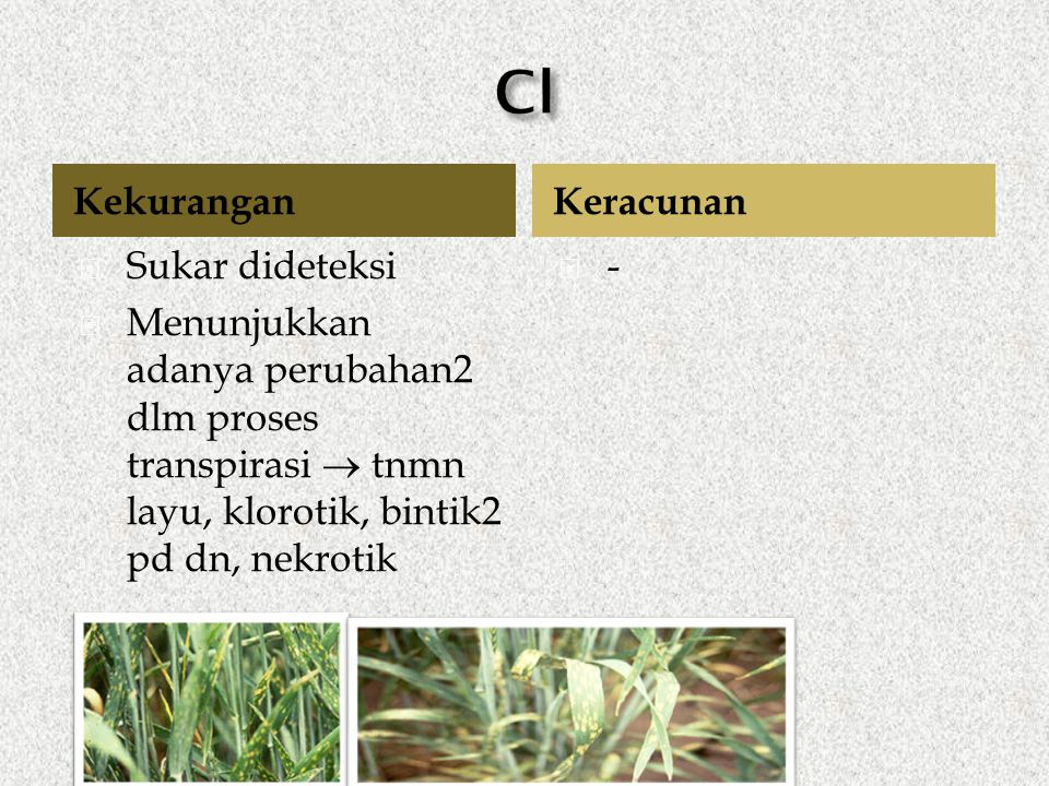Kekurangan  Sukar dideteksi  Menunjukkan adanya perubahan2 dlm proses transpirasi  tnmn layu, klorotik, bintik2 pd dn, nekrotik -- Keracunan