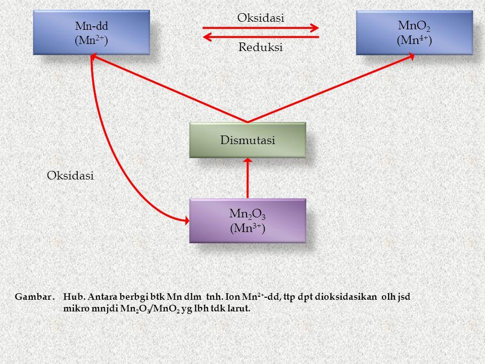 Mn-dd (Mn 2+ ) Oksidasi Reduksi MnO 2 (Mn 4+ ) Dismutasi Mn 2 O 3 (Mn 3+ ) Oksidasi Gambar.Hub.