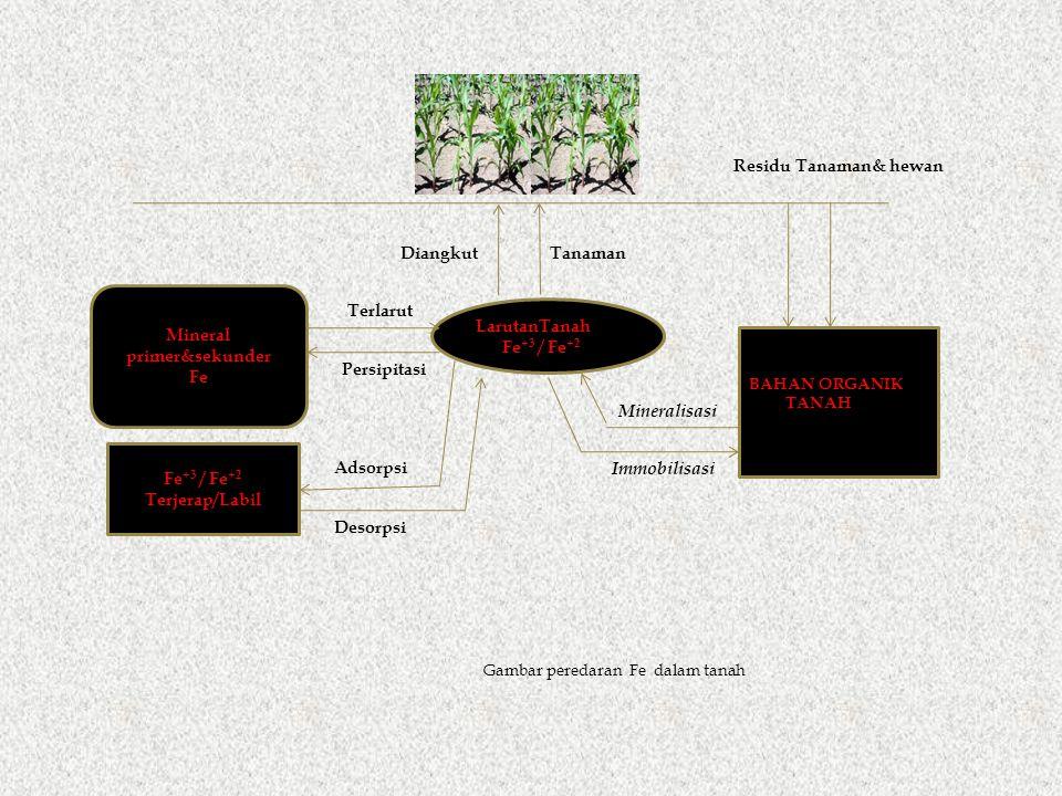 LarutanTanah Fe +3 / Fe +2 Terjerap/Labil Gambar peredaran Fe dalam tanah BAHAN ORGANIK TANAH Mineralisasi Immobilisasi Residu Tanaman& hewan DiangkutTanaman Mineral primer&sekunder Fe Terlarut Persipitasi Desorpsi Adsorpsi