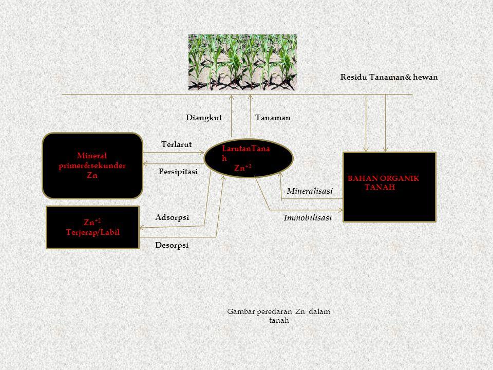 LarutanTana h Zn +2 Terjerap/Labil Gambar peredaran Zn dalam tanah BAHAN ORGANIK TANAH Mineralisasi Immobilisasi Residu Tanaman& hewan DiangkutTanaman Mineral primer&sekunder Zn Terlarut Persipitasi Desorpsi Adsorpsi