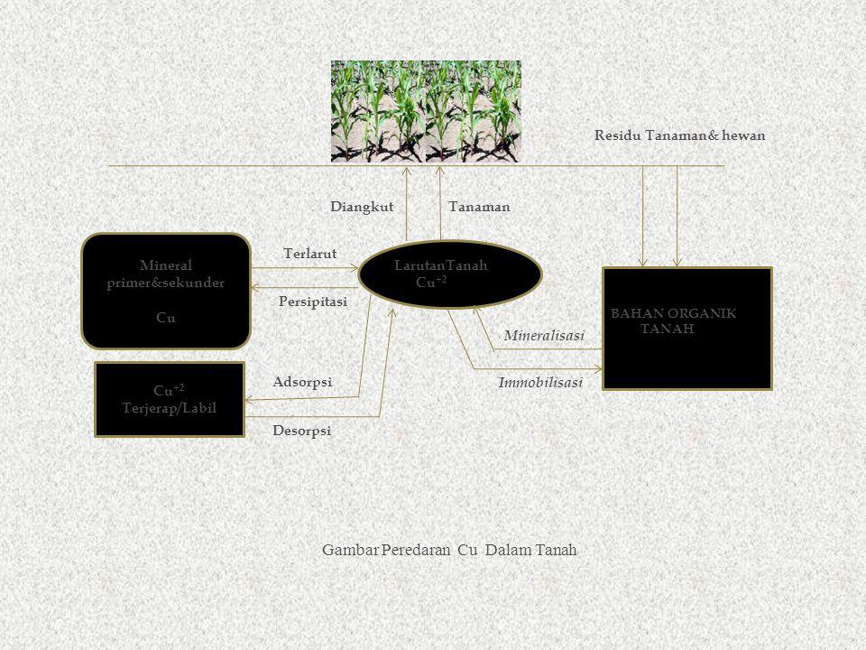 LarutanTanah Cu +2 Terjerap/Labil Gambar Peredaran Cu Dalam Tanah BAHAN ORGANIK TANAH Mineralisasi Immobilisasi Residu Tanaman& hewan DiangkutTanaman Mineral primer&sekunder Cu Terlarut Persipitasi Desorpsi Adsorpsi