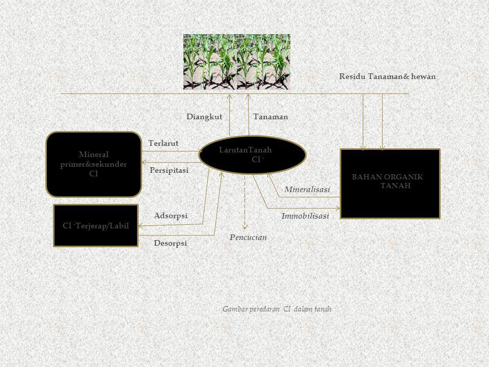LarutanTanah Cl - Cl - Terjerap/Labil Gambar peredaran Cl dalam tanah BAHAN ORGANIK TANAH Mineralisasi Immobilisasi Residu Tanaman& hewan DiangkutTanaman Mineral primer&sekunder Cl Terlarut Persipitasi Desorpsi Adsorpsi Pencucian