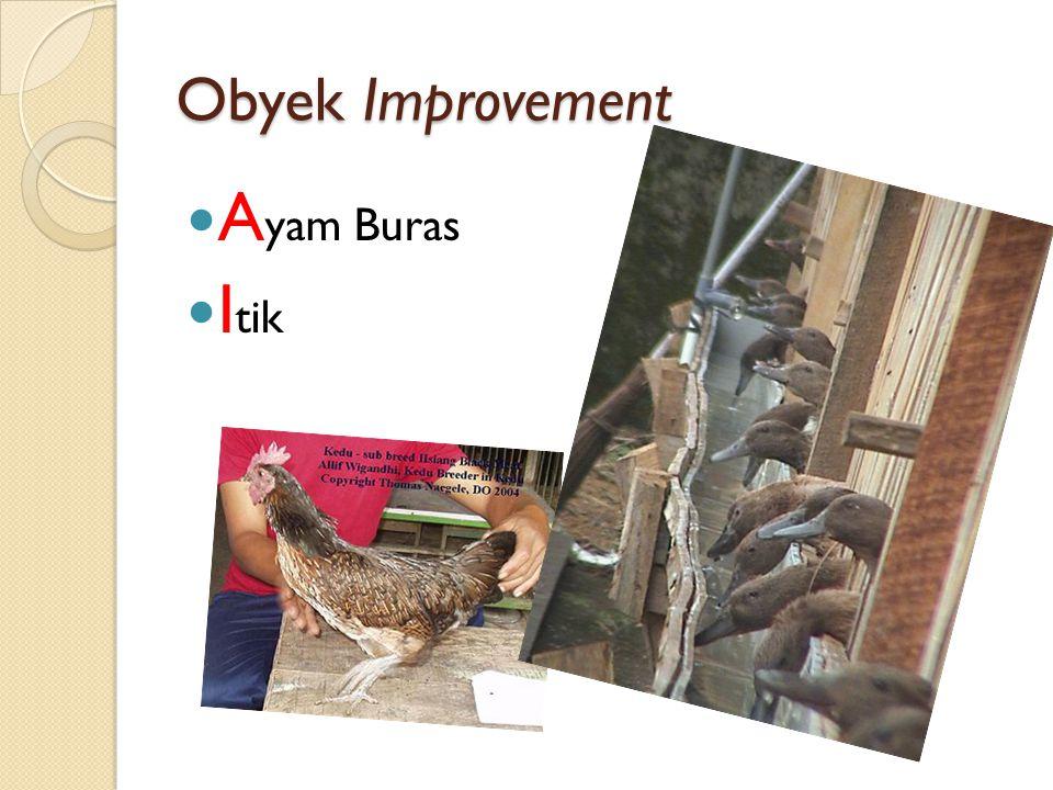 Obyek Improvement A yam Buras I tik