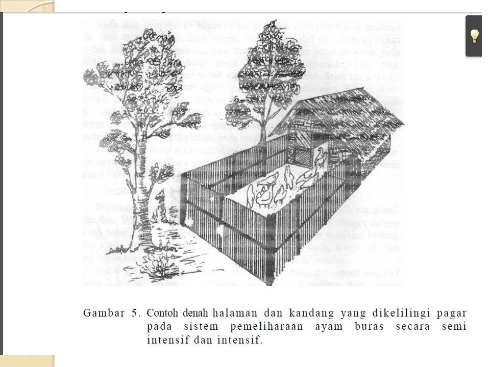 Formulasi pakan itik untuk masa grower (umur 2-5 bl) : Jumlah pemberian 88 - 120 gram/ekor/hari sesuai tingkatan umur.