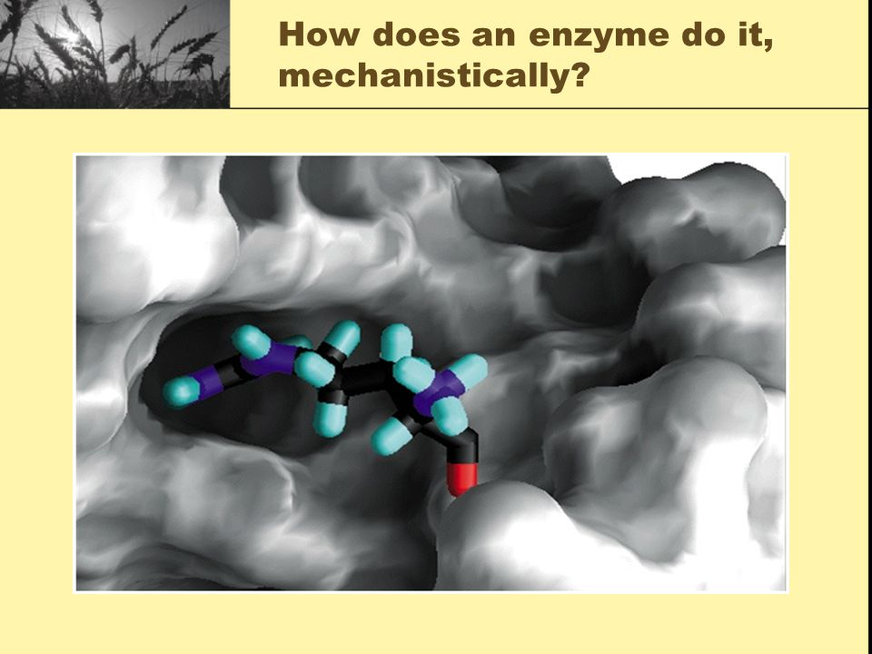 How does an enzyme do it, thermodynamically?