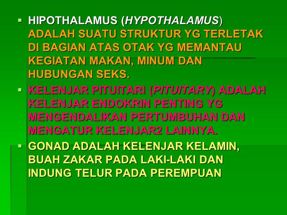 HIPOTHALAMUS (HYPOTHALAMUS) ADALAH SUATU STRUKTUR YG TERLETAK DI BAGIAN ATAS OTAK YG MEMANTAU KEGIATAN MAKAN, MINUM DAN HUBUNGAN SEKS.  KELENJAR PI