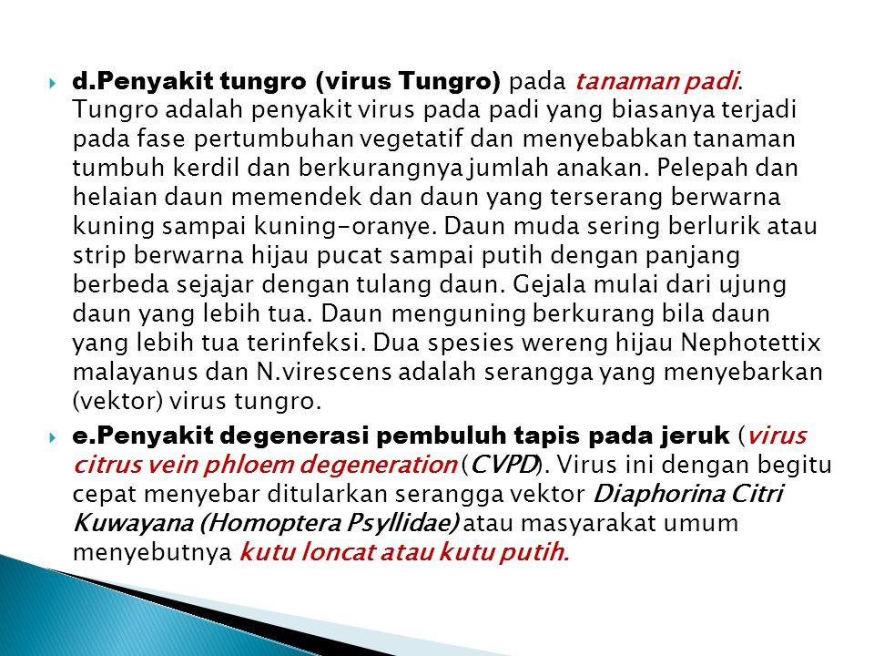  d.Penyakit tungro (virus Tungro) pada tanaman padi. Tungro adalah penyakit virus pada padi yang biasanya terjadi pada fase pertumbuhan vegetatif dan