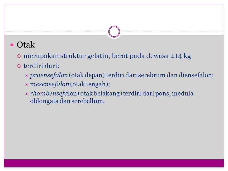 Otak  merupakan struktur gelatin, berat pada dewasa ±14 kg  terdiri dari:  proensefalon (otak depan) terdiri dari serebrum dan diensefalon;  mesensefalon (otak tengah);  rhombensefalon (otak belakang) terdiri dari pons, medula oblongata dan serebellum.