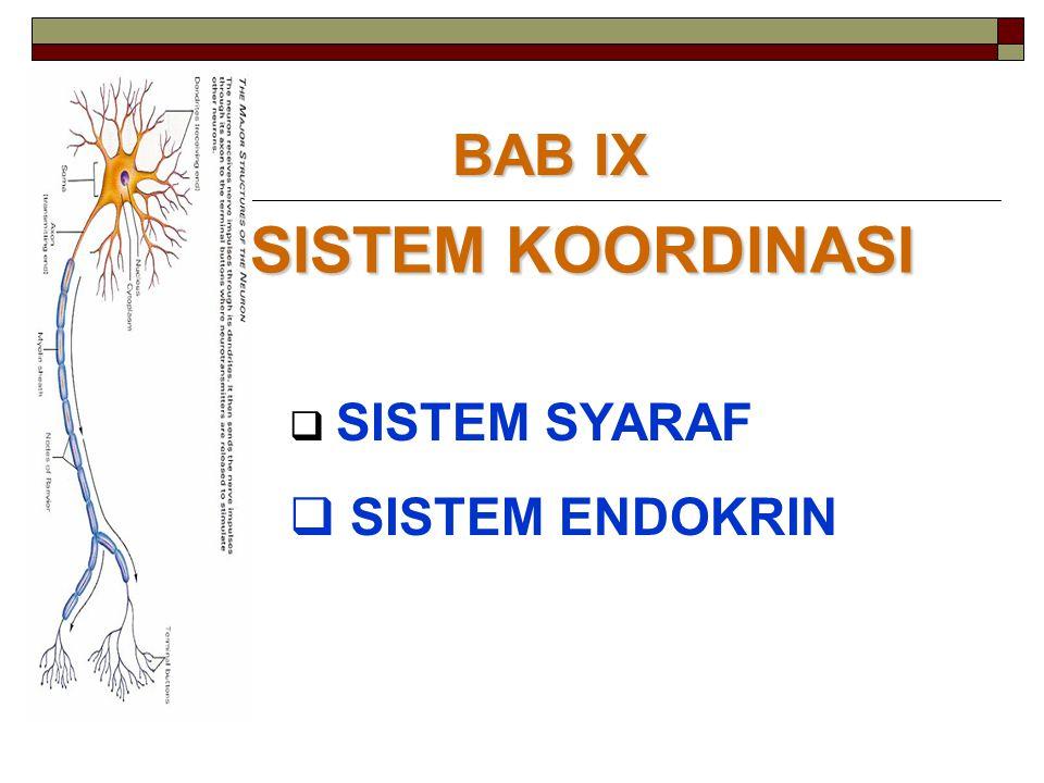 A.SISTEM SARAF S.S Pusat S.S. Tepi Otak Otak Besar Otak kecil Saraf Penghubung S.Cranial S.