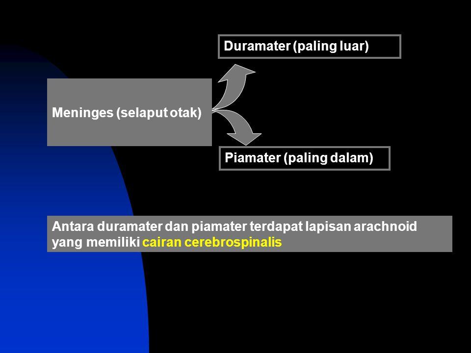 II.Pembagian Berdasarkan Fungsi : 1.N. Sensorik (n.