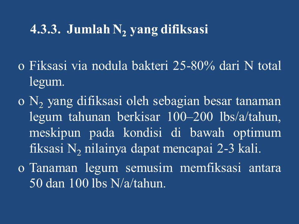 4.3.3. Jumlah N 2 yang difiksasi oFiksasi via nodula bakteri 25-80% dari N total legum. oN 2 yang difiksasi oleh sebagian besar tanaman legum tahunan