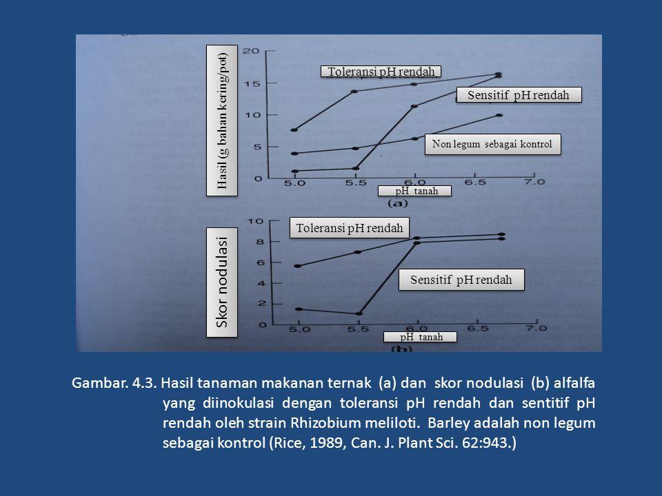 Sensitif pH rendah Toleransi pH rendah Skor nodulasi Hasil (g bahan kering/pot) Gambar. 4.3. Hasil tanaman makanan ternak (a) dan skor nodulasi (b) al