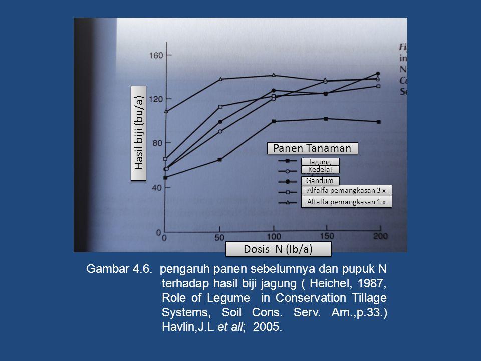 Gambar 4.6. pengaruh panen sebelumnya dan pupuk N terhadap hasil biji jagung ( Heichel, 1987, Role of Legume in Conservation Tillage Systems, Soil Con