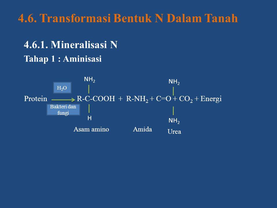 4.6. Transformasi Bentuk N Dalam Tanah 4.6.1. Mineralisasi N Tahap 1 : Aminisasi Protein R-C-COOH + R-NH 2 + C=O + CO 2 + Energi NH 2 H Asam aminoAmid