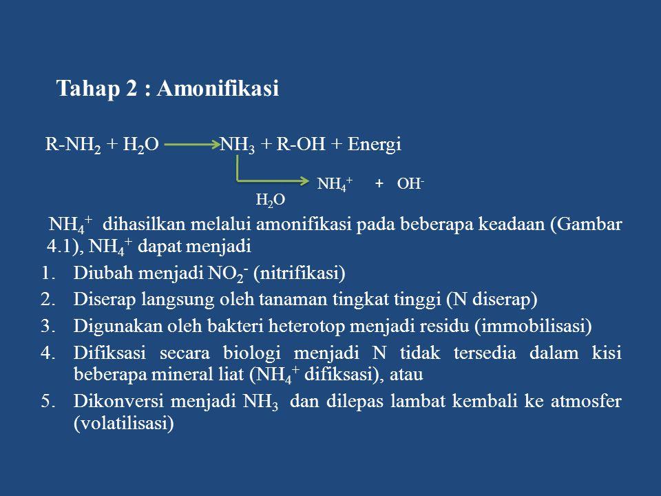 Tahap 2 : Amonifikasi R-NH 2 + H 2 O NH 3 + R-OH + Energi NH 4 + dihasilkan melalui amonifikasi pada beberapa keadaan (Gambar 4.1), NH 4 + dapat menja
