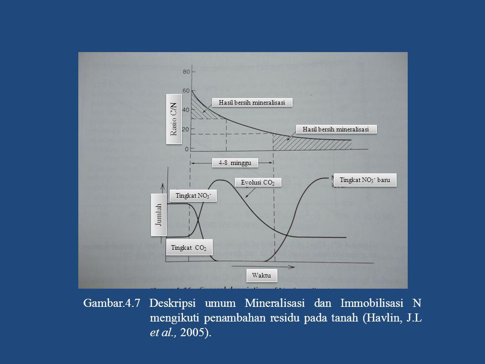 Gambar.4.7 Deskripsi umum Mineralisasi dan Immobilisasi N mengikuti penambahan residu pada tanah (Havlin, J.L et al., 2005). Rasio C/N Tingkat NO 3 -