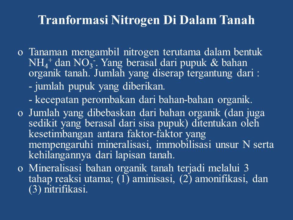 Tranformasi Nitrogen Di Dalam Tanah oTanaman mengambil nitrogen terutama dalam bentuk NH 4 + dan NO 3 -. Yang berasal dari pupuk & bahan organik tanah
