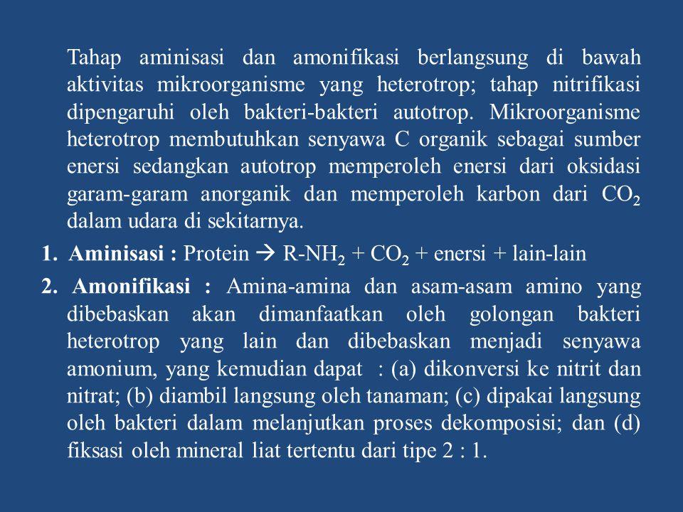 Tahap aminisasi dan amonifikasi berlangsung di bawah aktivitas mikroorganisme yang heterotrop; tahap nitrifikasi dipengaruhi oleh bakteri-bakteri auto