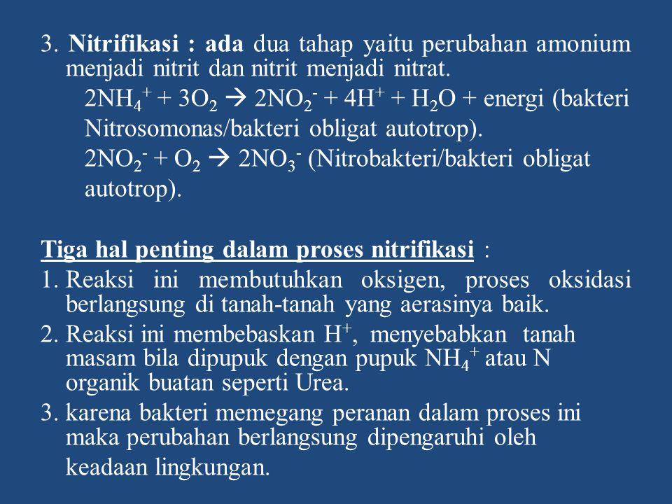 3. Nitrifikasi : ada dua tahap yaitu perubahan amonium menjadi nitrit dan nitrit menjadi nitrat. 2NH 4 + + 3O 2  2NO 2 - + 4H + + H 2 O + energi (bak