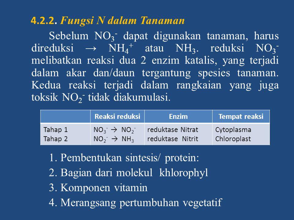 4.2.2. Fungsi N dalam Tanaman Sebelum NO 3 - dapat digunakan tanaman, harus direduksi → NH 4 + atau NH 3. reduksi NO 3 - melibatkan reaksi dua 2 enzim