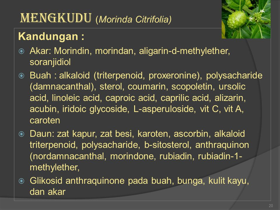 Kandungan :  Akar: Morindin, morindan, aligarin-d-methylether, soranjidiol  Buah : alkaloid (triterpenoid, proxeronine), polysacharide (damnacanthal
