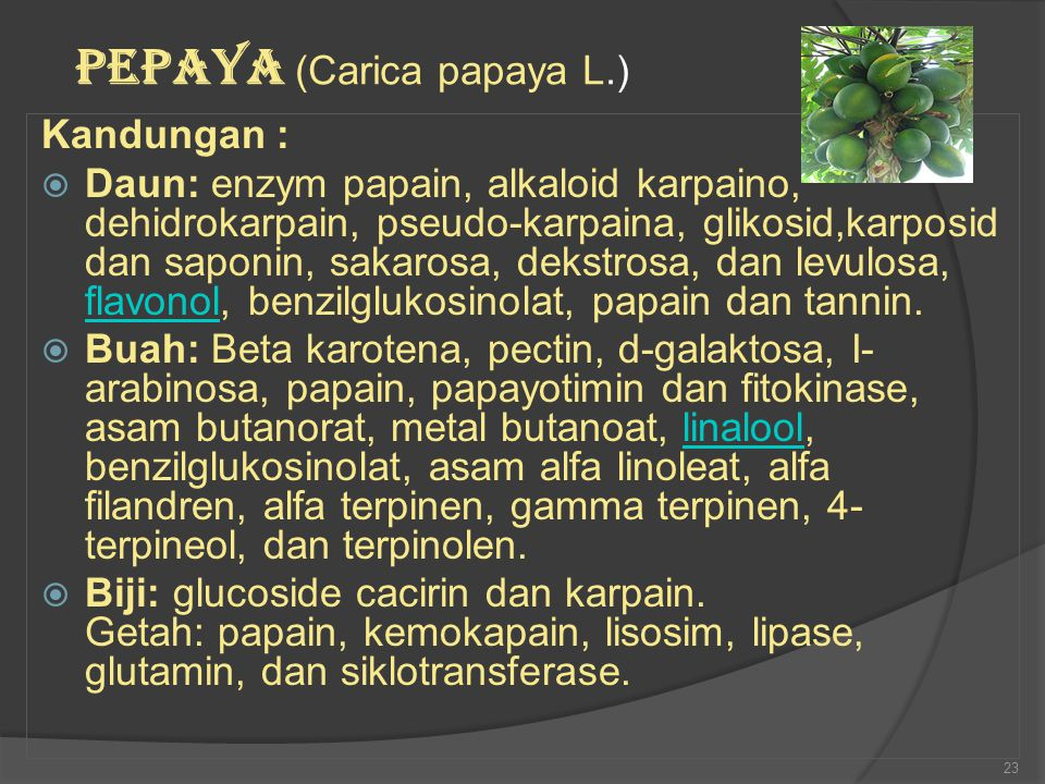 Kandungan :  Daun: enzym papain, alkaloid karpaino, dehidrokarpain, pseudo-karpaina, glikosid,karposid dan saponin, sakarosa, dekstrosa, dan levulosa