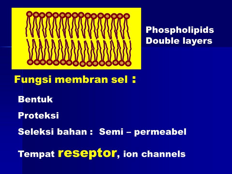 Fungsi membran sel : Phospholipids Double layers Bentuk Proteksi Seleksi bahan : Semi – permeabel Tempat reseptor, ion channels