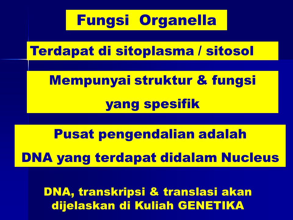 Fungsi Organella Terdapat di sitoplasma / sitosol Mempunyai struktur & fungsi yang spesifik Pusat pengendalian adalah DNA yang terdapat didalam Nucleus DNA, transkripsi & translasi akan dijelaskan di Kuliah GENETIKA