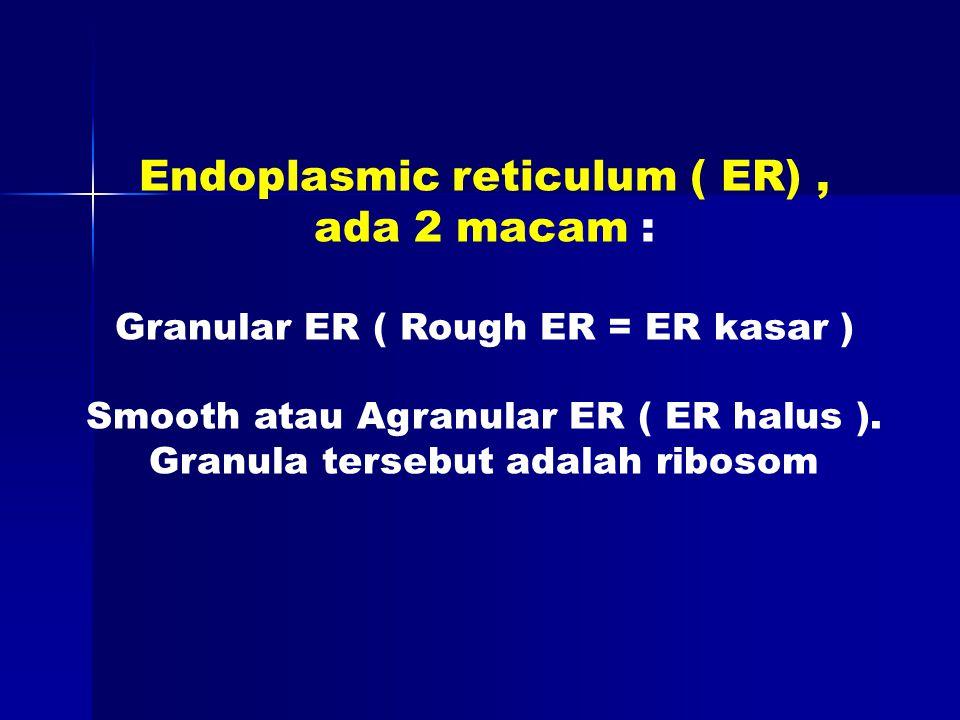 Endoplasmic reticulum ( ER), ada 2 macam : Granular ER ( Rough ER = ER kasar ) Smooth atau Agranular ER ( ER halus ).