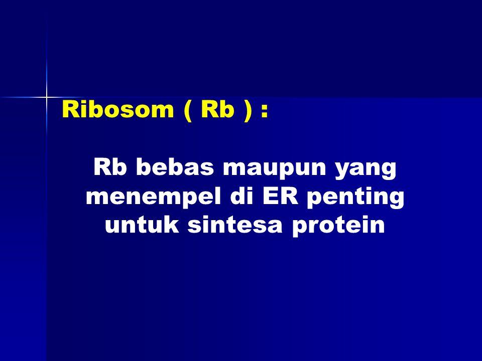 Ribosom ( Rb ) : Rb bebas maupun yang menempel di ER penting untuk sintesa protein
