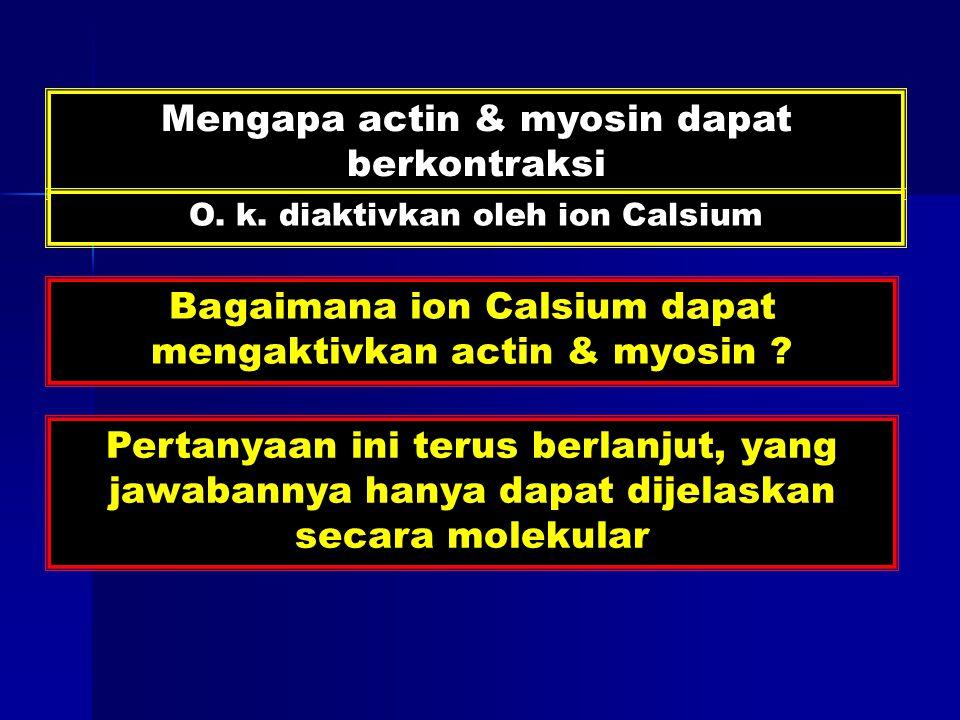Mengapa actin & myosin dapat berkontraksi O. k.