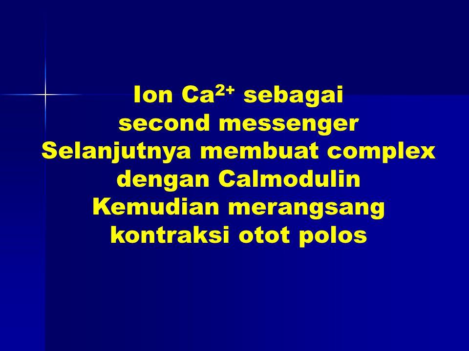 Ion Ca 2+ sebagai second messenger Selanjutnya membuat complex dengan Calmodulin Kemudian merangsang kontraksi otot polos