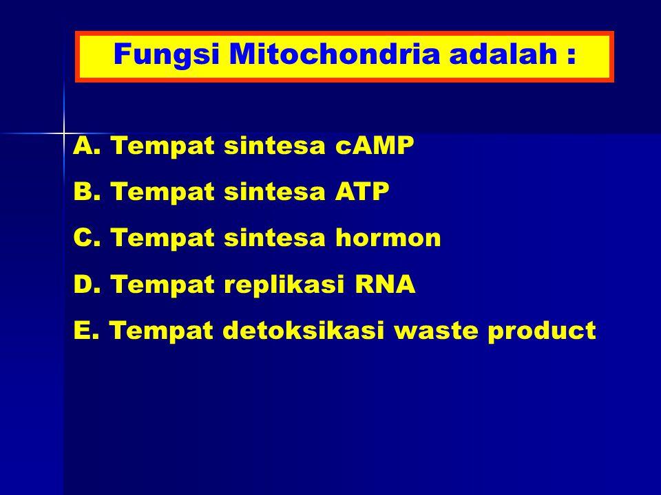 Fungsi Mitochondria adalah : A. Tempat sintesa cAMP B.