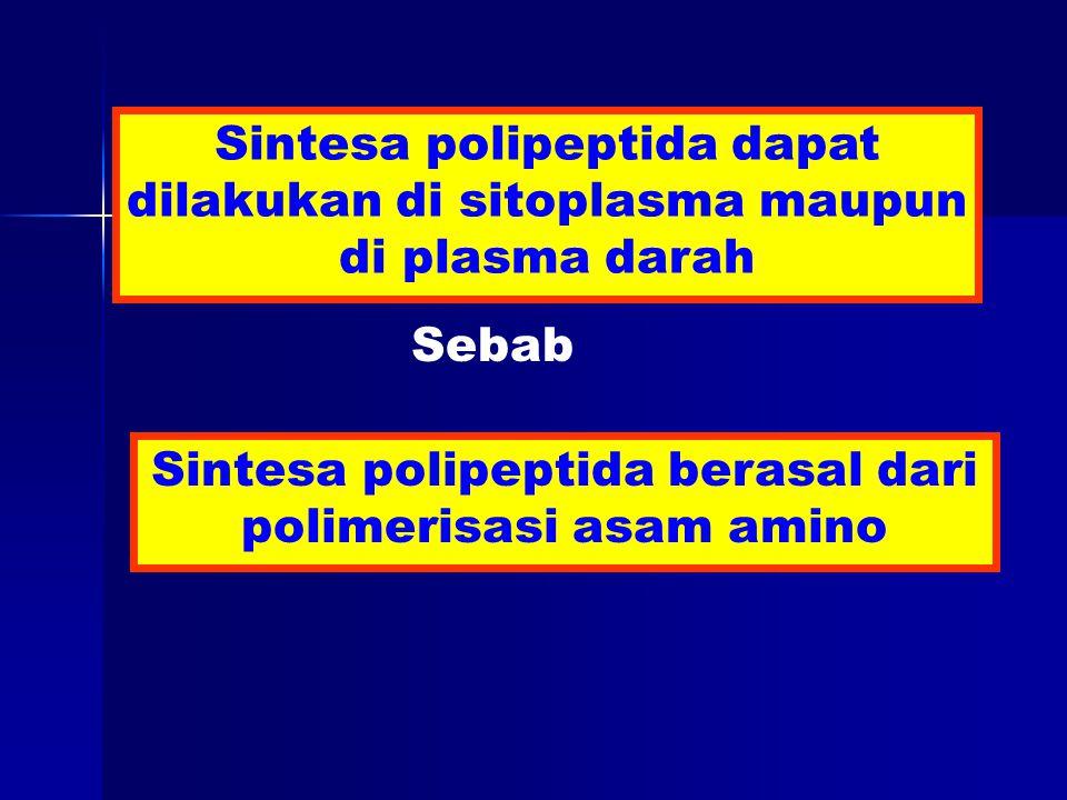 Sintesa polipeptida dapat dilakukan di sitoplasma maupun di plasma darah Sintesa polipeptida berasal dari polimerisasi asam amino Sebab