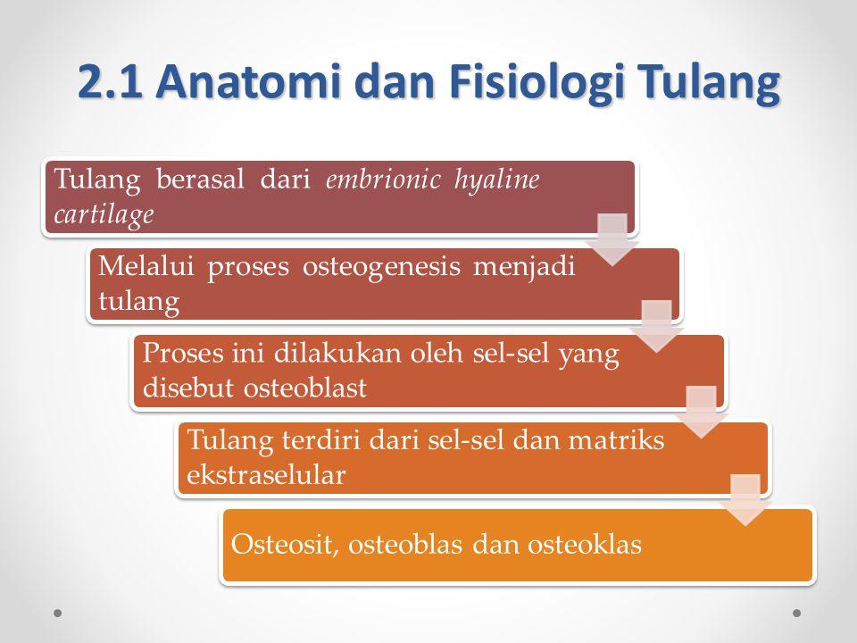 2.1 Anatomi dan Fisiologi Tulang Tulang berasal dari embrionic hyaline cartilage Melalui proses osteogenesis menjadi tulang Proses ini dilakukan oleh sel-sel yang disebut osteoblast Tulang terdiri dari sel-sel dan matriks ekstraselular Osteosit, osteoblas dan osteoklas