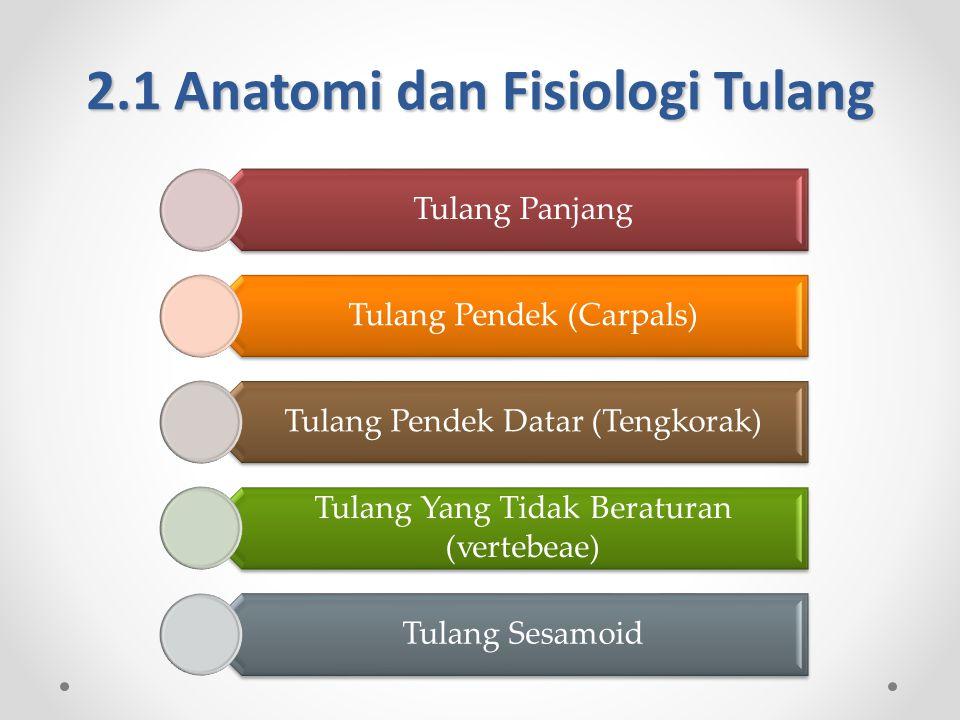 2.1 Anatomi dan Fisiologi Tulang Tulang Panjang Tulang Pendek (Carpals) Tulang Pendek Datar (Tengkorak) Tulang Yang Tidak Beraturan (vertebeae) Tulang Sesamoid