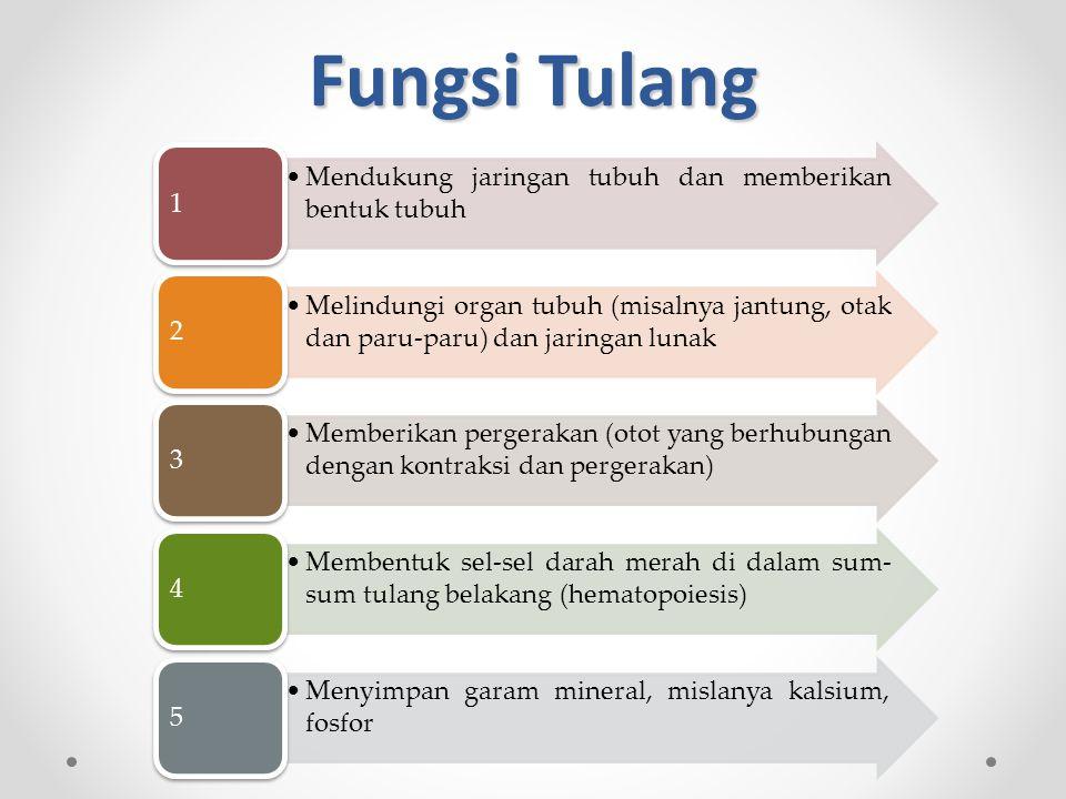 Fungsi Tulang Mendukung jaringan tubuh dan memberikan bentuk tubuh 1 Melindungi organ tubuh (misalnya jantung, otak dan paru-paru) dan jaringan lunak 2 Memberikan pergerakan (otot yang berhubungan dengan kontraksi dan pergerakan) 3 Membentuk sel-sel darah merah di dalam sum- sum tulang belakang (hematopoiesis) 4 Menyimpan garam mineral, mislanya kalsium, fosfor 5