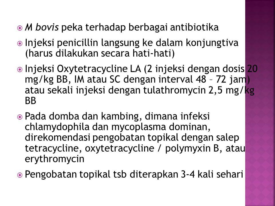  M bovis peka terhadap berbagai antibiotika  Injeksi penicillin langsung ke dalam konjungtiva (harus dilakukan secara hati-hati)  Injeksi Oxytetrac