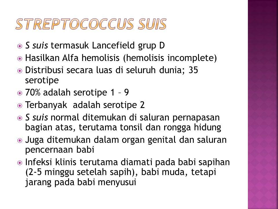  S suis termasuk Lancefield grup D  Hasilkan Alfa hemolisis (hemolisis incomplete)  Distribusi secara luas di seluruh dunia; 35 serotipe  70% adal