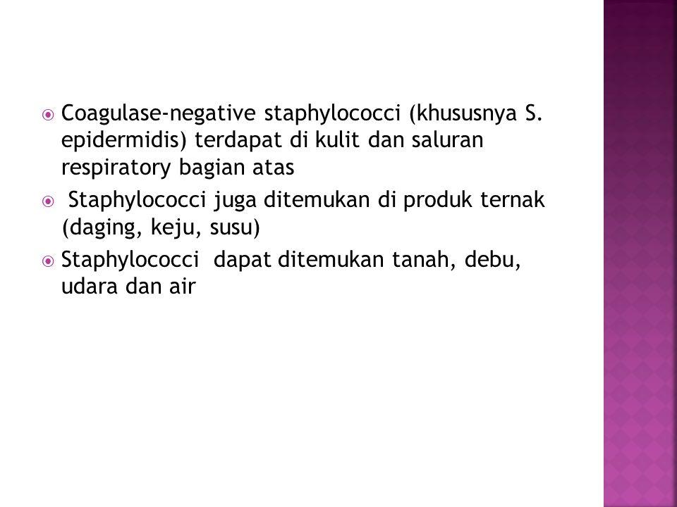  Coagulase-negative staphylococci (khususnya S. epidermidis) terdapat di kulit dan saluran respiratory bagian atas  Staphylococci juga ditemukan di