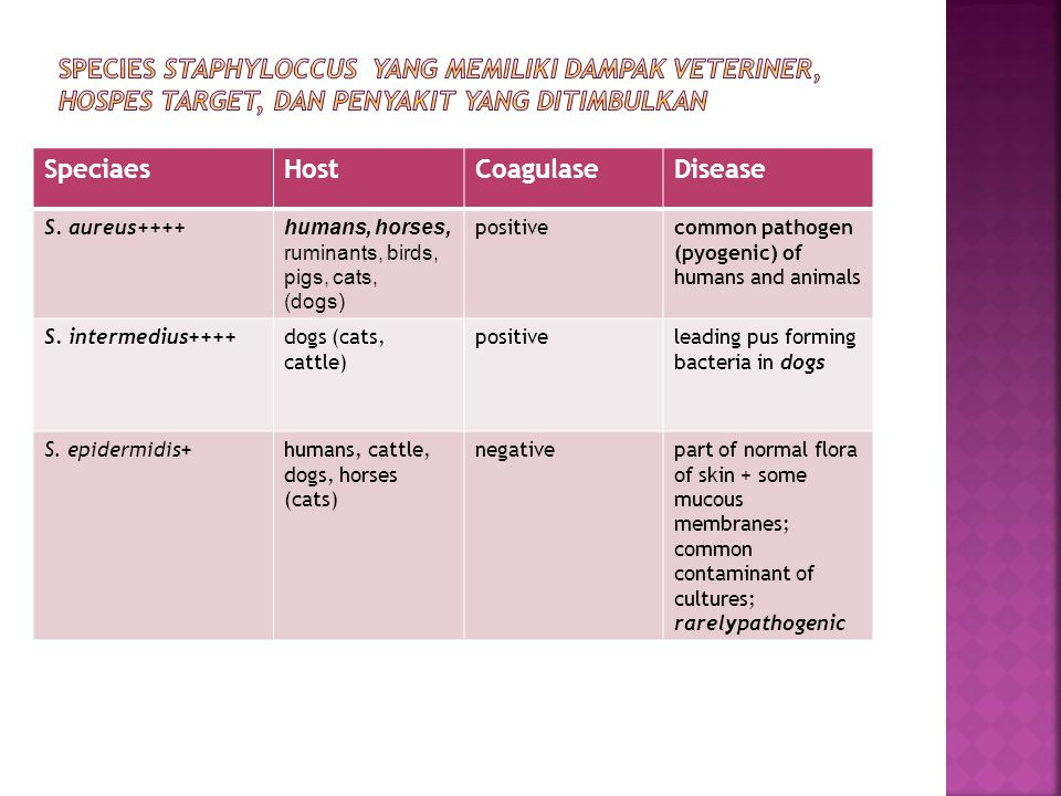 SpeciaesHostCoagulaseDisease S. aureus++++ humans, horses, ruminants, birds, pigs, cats, (dogs) positivecommon pathogen (pyogenic) of humans and anima