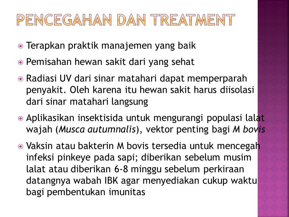  M bovis peka terhadap berbagai antibiotika  Injeksi penicillin langsung ke dalam konjungtiva (harus dilakukan secara hati-hati)  Injeksi Oxytetracycline LA (2 injeksi dengan dosis 20 mg/kg BB, IM atau SC dengan interval 48 – 72 jam) atau sekali injeksi dengan tulathromycin 2,5 mg/kg BB  Pada domba dan kambing, dimana infeksi chlamydophila dan mycoplasma dominan, direkomendasi pengobatan topikal dengan salep tetracycline, oxytetracycline / polymyxin B, atau erythromycin  Pengobatan topikal tsb diterapkan 3-4 kali sehari
