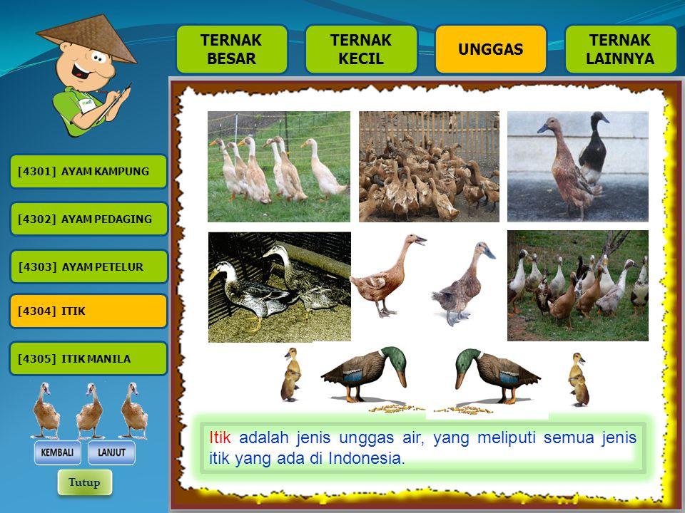 TERNAK BESAR TERNAK KECIL TERNAK LAINNYA UNGGAS [4301] AYAM KAMPUNG [4302] AYAM PEDAGING [4303] AYAM PETELUR [4304] ITIK [4305] ITIK MANILA Ayam Ras Petelur adalah ayam ras yang karena sifatnya memproduksi telur dalam jumlah yang banyak, dipelihara untuk tujuan produksi telur.