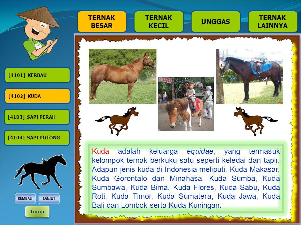 TERNAK BESAR TERNAK KECIL TERNAK LAINNYA UNGGAS [4101] KERBAU [4102] KUDA [4104] SAPI POTONG [4103] SAPI PERAH Kuda adalah keluarga equidae, yang termasuk kelompok ternak berkuku satu seperti keledai dan tapir.