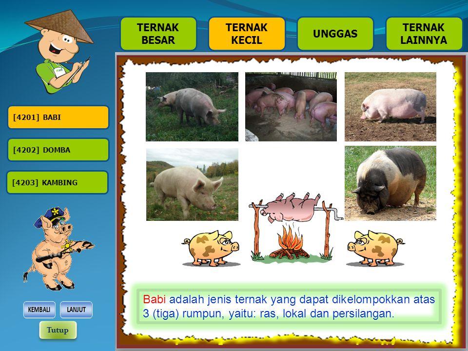 [4201] BABI [4202] DOMBA [4203] KAMBING TERNAK BESAR TERNAK KECIL TERNAK LAINNYA UNGGAS Babi adalah jenis ternak yang dapat dikelompokkan atas 3 (tiga) rumpun, yaitu: ras, lokal dan persilangan.